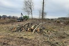 Januari 2021 - de bomen worden gekapt.